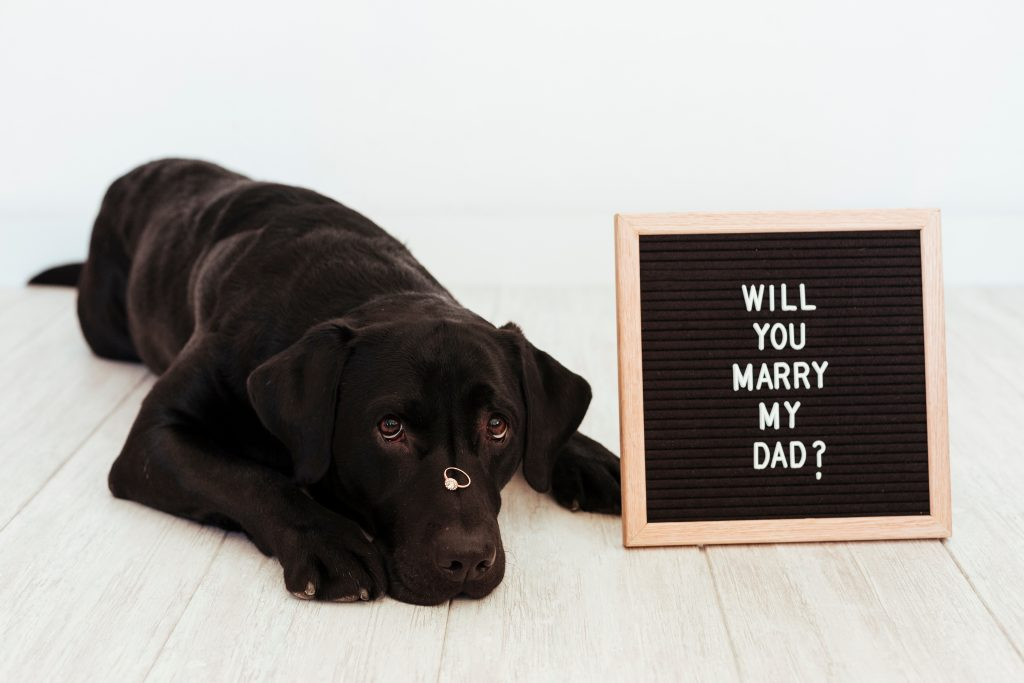 Perro pedida matrimonio